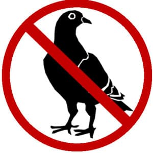 pigeon wildlife removal oakville