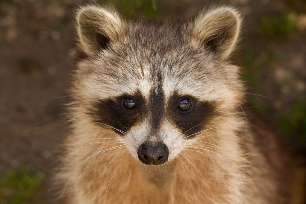 How to choose a wildlife removal company?