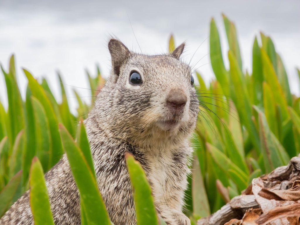 Who should I call to remove a squirrel from my home?